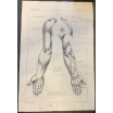 Anatomic study in pencil - Normal School of drawing Arts