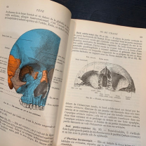 "Anatomical vintage book - 1949: ""Précis d'anatomie et de dissection"""