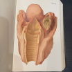Colour atlas of Anatomy for autopsy - 1902