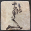 Marble paperweight, coaster: Skulls and skeletons