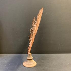 Gorgone rouge Acabaria biserialis sur socle naturel