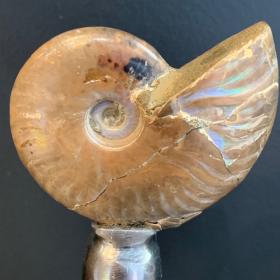 Ammonite nacrée de Madagascar sur socle
