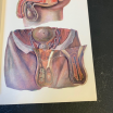 "Removable board ""Elementary Anatomy Atlas"" by Vigot Frères éditeurs"