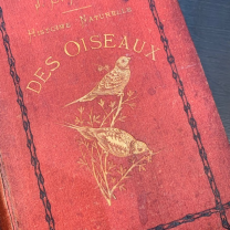 """""""Natural History of Birds"""" by Chenu in 1862 (book)"""