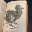 Illustrated Dictionary of Natural History - 1930