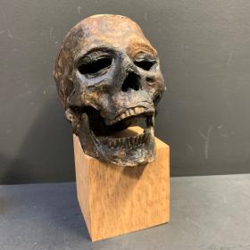 Tête de momie - Crâne - Réplique artiste J.Cavailles