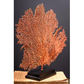 Gorgone rouge - Acabaria biserialis sur socle carré