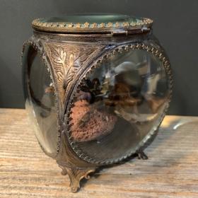 Boite reliquaire - Mygale Melopoeus minax