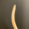 Kudu polished horn bone on pedestal
