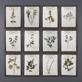 Reissue of old herbarium plates