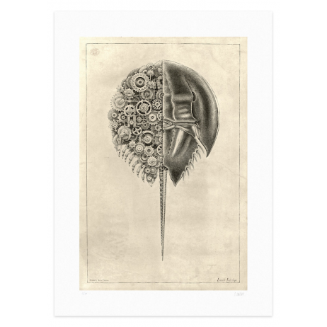 Limule Indicilope: Steampunk print realized by Steeven Salvat