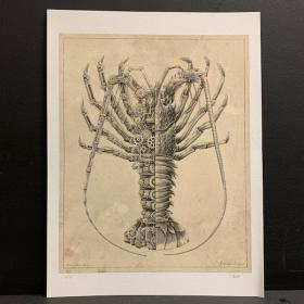"""""""Astacidae Corinae"""" Langouste: Impression réalisée par Steeven Salvat"""
