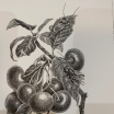 Frutivores: Steampunk print realized by Steeven Salvat