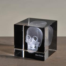 Radiographie 3D Crâne petit