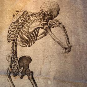 Squelette: Gravure ancienne 1668 . Par François Tortebat d'après Vésale.