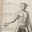 """Surgical courses, demonstrated at the Royal Garden"" by Dionis, royal surgeon in 1777, 8th edition"