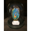 Painted Canvas: Feather of peacock under glass bell