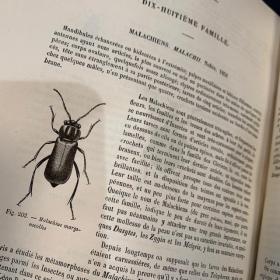 Encyclopédie d'Histoire Naturelle - Les coléoptères Volume2 par CHENU 1880