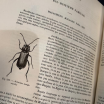 Old book: Encyclopedia of Natural History - Butterflies by Chenu XIXth century