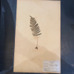 Old mounted herb branch - herbarium plank