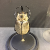 Megasoma elephas occidentalis :Scarab under a globe