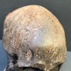 Human skull - artist reproduction by Jérôme Cavailles