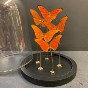 Flight of butterflies: Dryas Iulia under glass