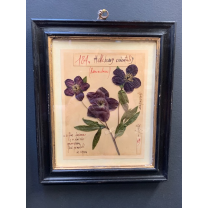 Real framed and calligraphed Herbarium