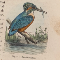 """""""Natural History of Birds"""" by Chenu in 1862 - Old book : 2 volumes"""