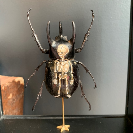 Reliquary box on foot: Chalcosoma atlas painted by Mandrin Valet