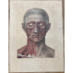 """Anatomical board: """"L'Anatomie de L'Homme"""" by Bourgery and Jacob -1831"""
