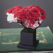 Red Coral: Tubipora Musica CO473-4