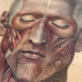 """Planche d'anatomie: """"L'Anatomie de L'Homme"""" par le Dr Bourgery et le dessinateur Jacob - 1831 - Lithographie"""