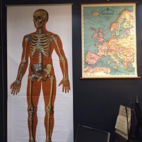 Affiche ancienne anatomique