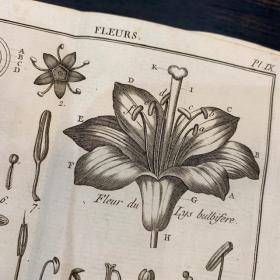 Dictionnaire de botanique par BULLIARD - Livre ancien de 1800 avec 20 planches dépliantes