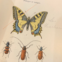 Pocket Atlas of Insects of France - 1896