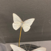 Little butterfly glass dome : Appias albina