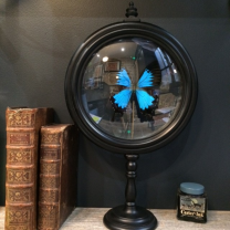 Reliquary Butterfly Ulysses