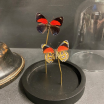 Little butterfly glass dome: Callicore cyllene