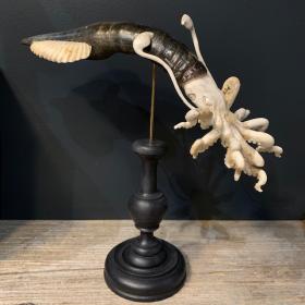 Calamar géant: Sculpture sur bois de cerf et corne de buffle