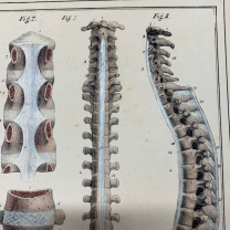 """Anatomy Board - """"Manual of descriptive anatomy of the human body"""" by Cloquet -1825"""