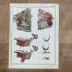 "Anatomic lithography: ""L'Anatomie de L'Homme"" by Bourgery and Jacob -1866"