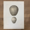 """Anatomic lithography: """"L'Anatomie de L'Homme"""" by Bourgery and Jacob -1866"""