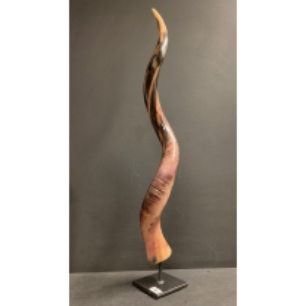 Koudou polished horn on pedestal