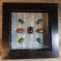 Box Frame - Scarab Composition