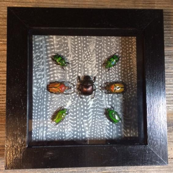 Cadre à Caisson - Composition scarabées