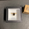 small Entomological Box - Bumblebee