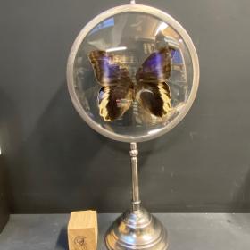 Naturalist Magnifier : caligo atreus