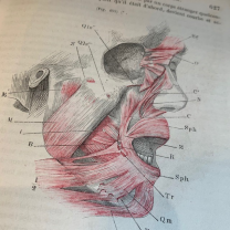 Traité D'anatomie Descriptive - Myology Volume I Part 2 -1862 by Cruveilhier
