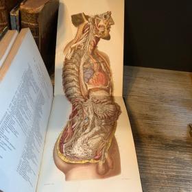 Traité D'anatomie Descriptive - 1867 par Cruveilhier - Névrologie